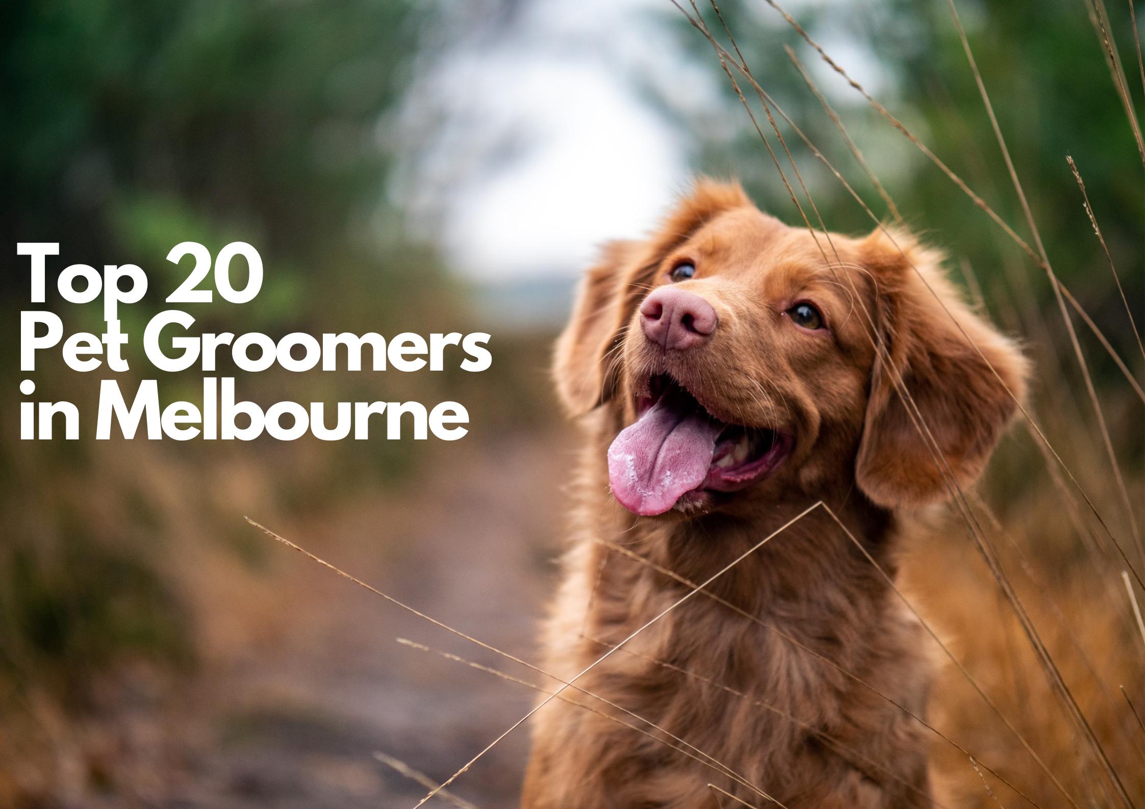 Top 20 Pet Groomers