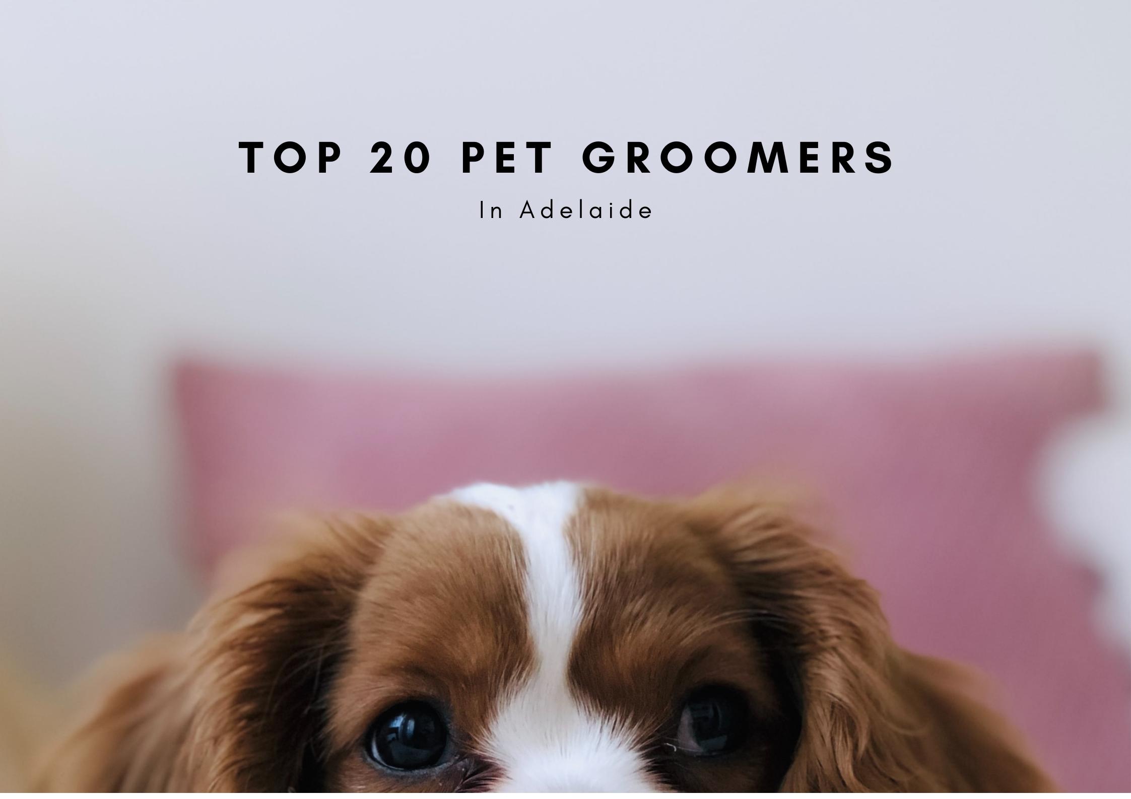 Top 20 Pet gro