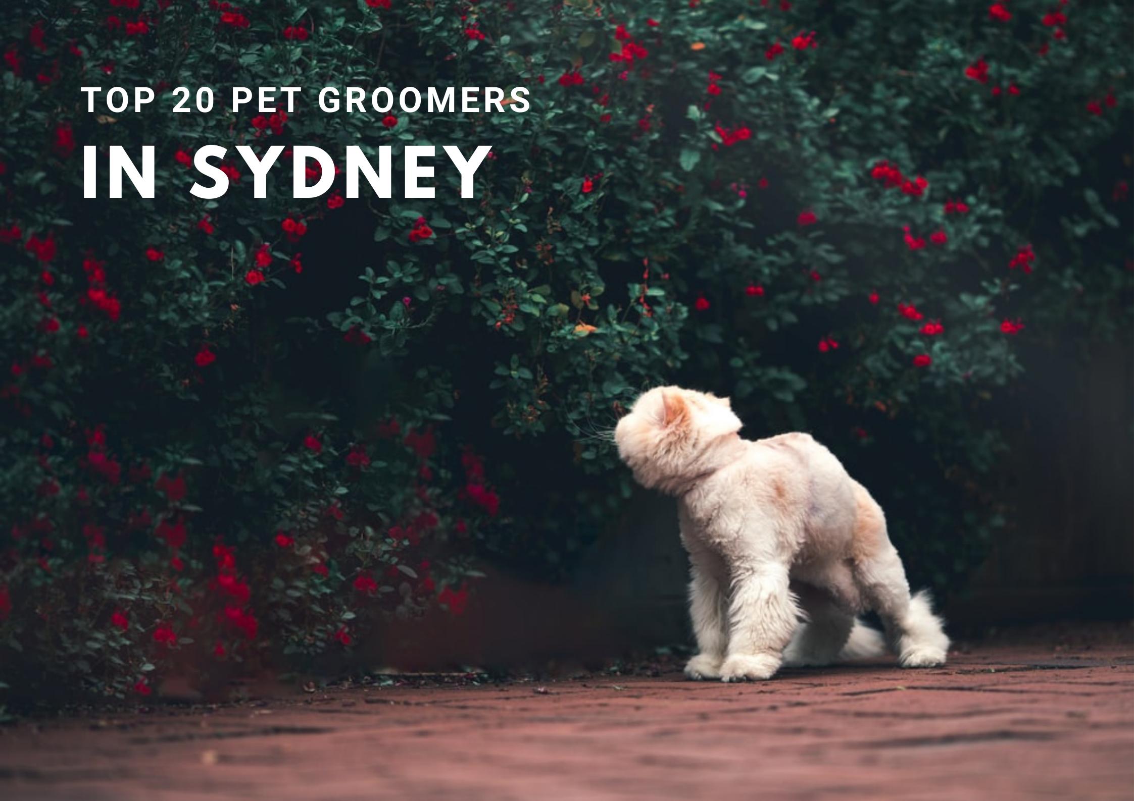 Top 20 Sydney PetgroomerS