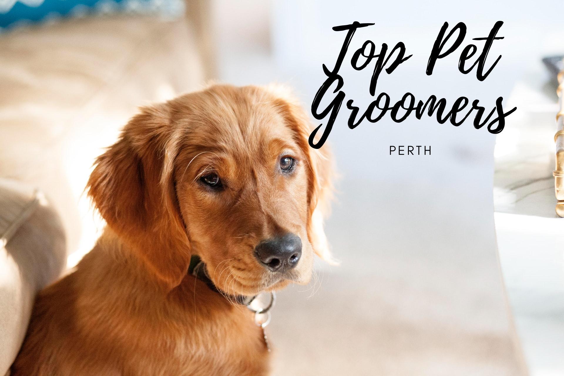 Top Pet Groomers